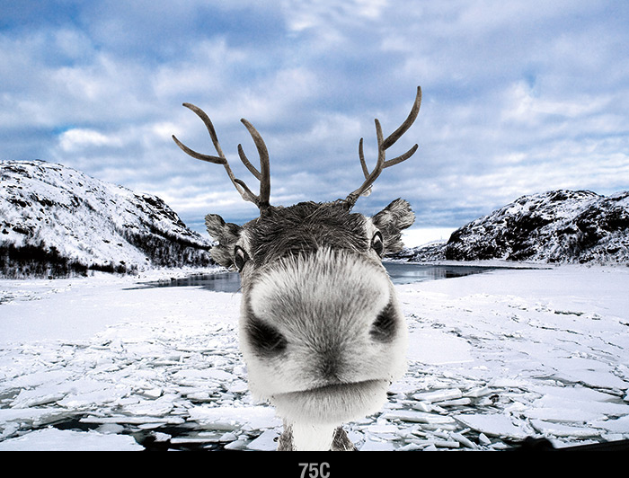 Reindeer Holiday Card by Psaris Productions
