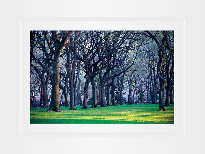 New York Notecard Central Park Trees Photo © Konstantino Hatzisarros 2013
