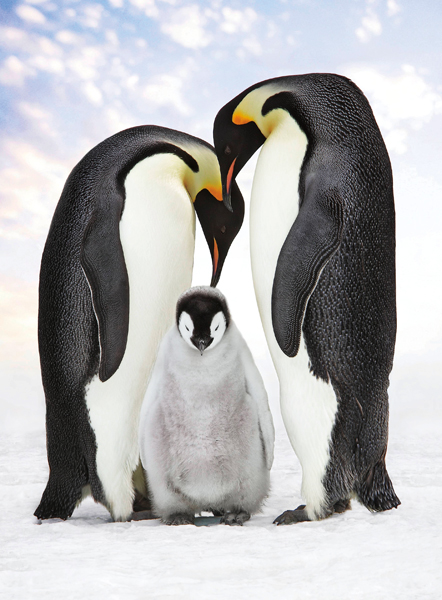 Penguin Family in Snow Holiday Card